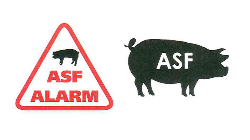 Afrykański pomór świń (ASF) w Lubuskiem